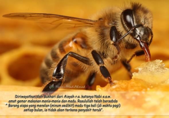 Hadis Nabi Madu Lebah