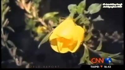 Bunga Azan