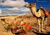 Unta Dalam Al-Quran